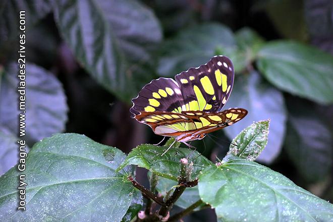 Papillons en f te 16e dition au jardin hamel for Jardin hamel papillon 2016